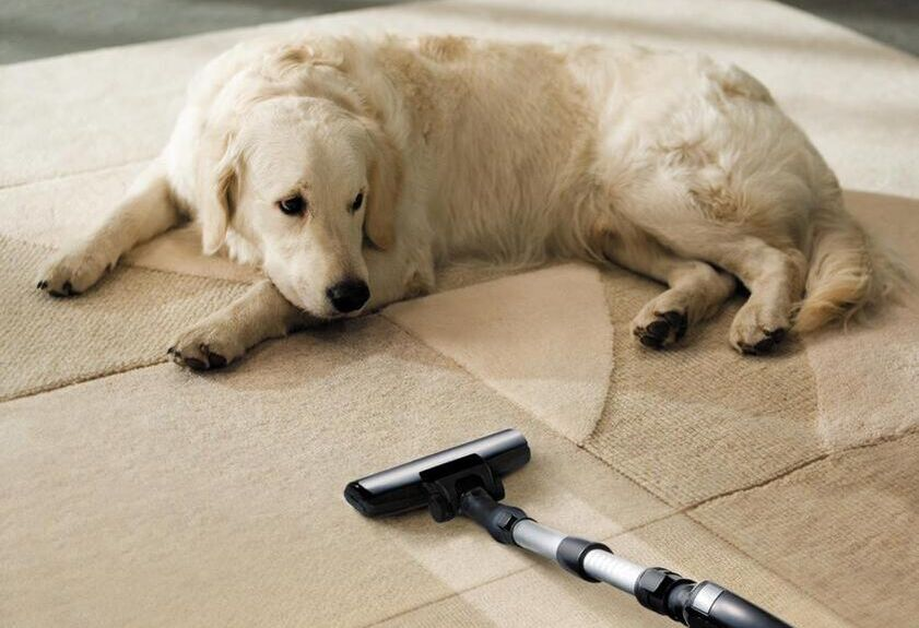 cleaning vacuum next to dog